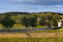View of Clos du Moulin aux Moines